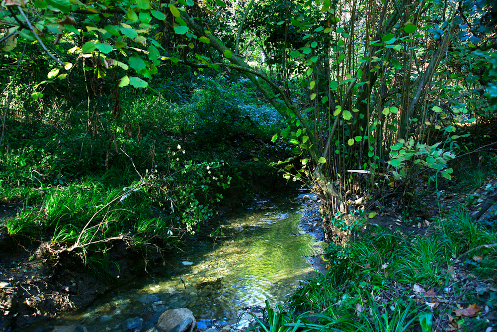 Collserola-Natural-Park